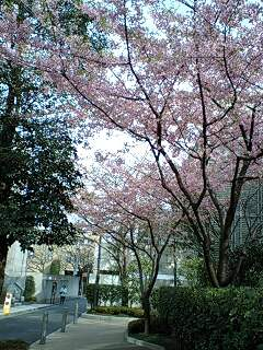 春が来たぁ